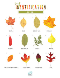 leaf identification game fall activities for kids