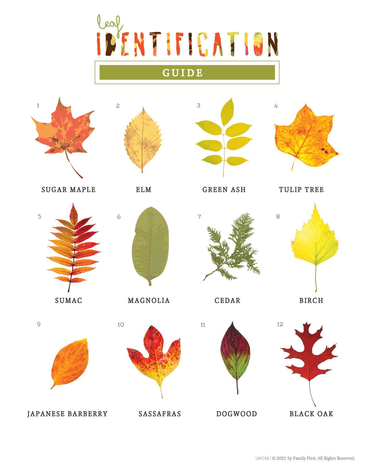 leaf identification
